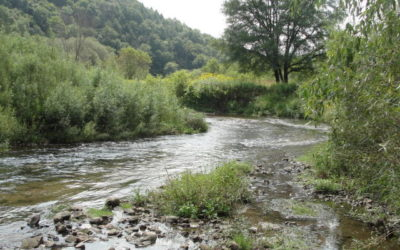 72 Acres/West Fork Trout Stream
